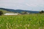 Летний лагерь 2010